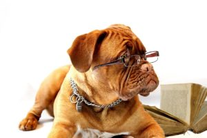 a photo of a dog in glasses, looking studious!